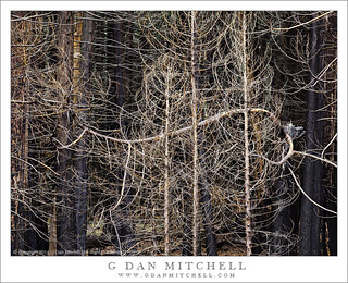 Burned Forest, Twisting Branches