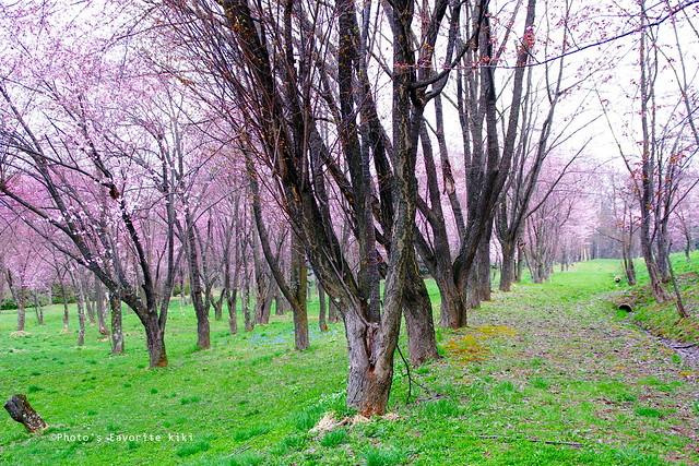 キトウシ森林公園1