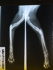 Med XRay front leg x2 healed