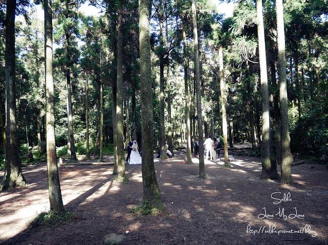 陽明山免費婚紗景點黑森林 (5)