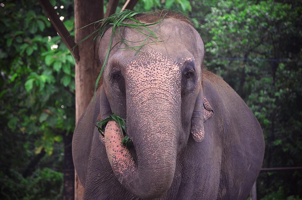 Elephant Hairdo