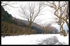 日本京都南丹市_美山雪祭.30