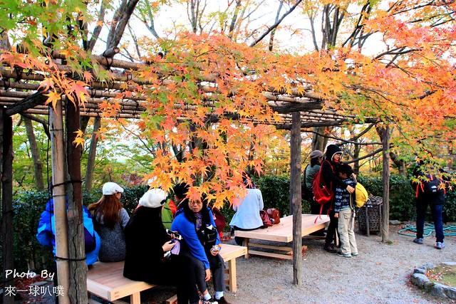 嵐山旅遊景點-常寂光寺23
