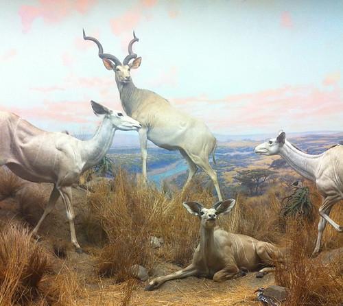 drollgirl natural history museum diorama IMG_7041