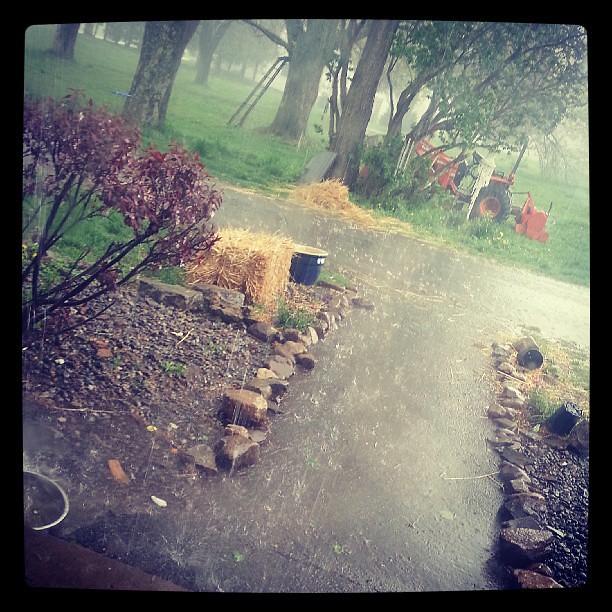 Rain for the garden.