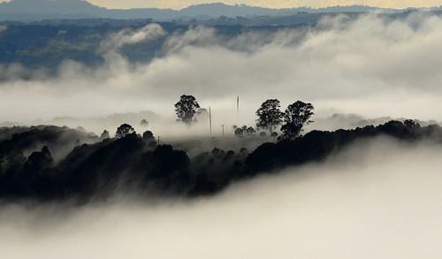 morning mist fog landscape australia valley nsw treescape treesinfog northernrivers valleyfog morninglandscape wilsonsrivervalley