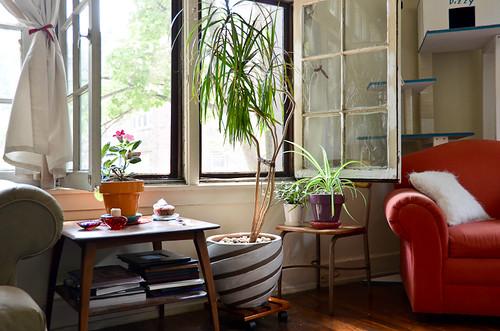 Gloxinia, Dracena Marginata, Christmas Cactus, and Spider Plant