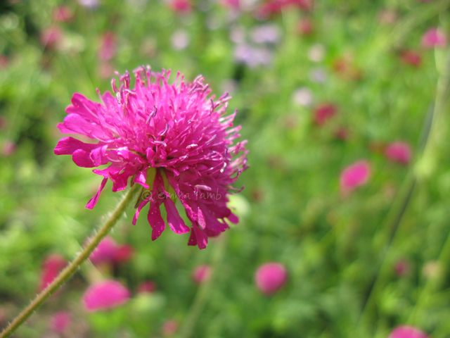 botanical details | Emma Lamb
