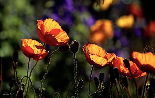 Couleurs florales