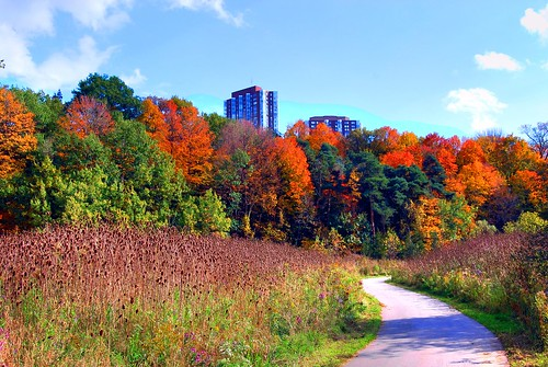 trees shadow red sky orange toronto ontario canada color building tree green fall nature grass yellow clouds forest buildings out outside outdoors photography photo high bush nikon shadows apartment photos path scarborough range hdr highdynamicrange nikond60 cans2s