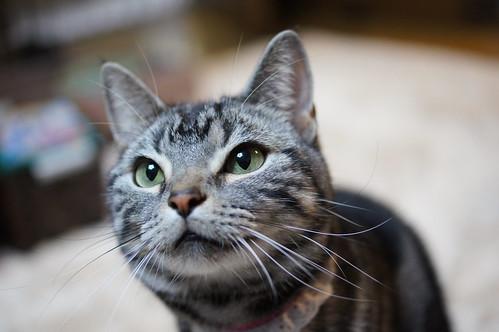 cat #66