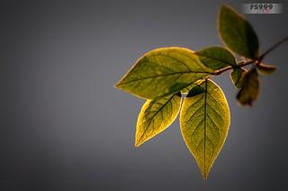 Leaves on Grey