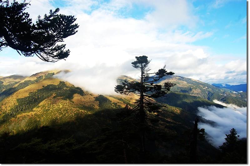 合歡群峰(From 奇萊山登山步道) 4