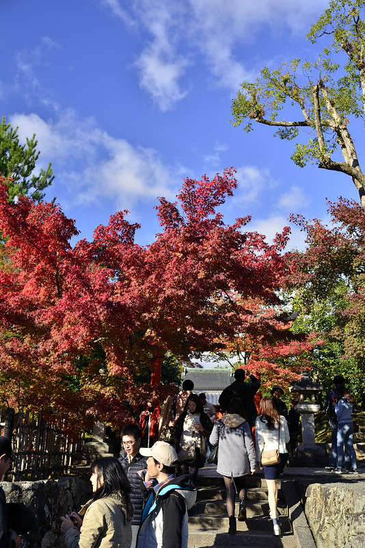 2013.11.13京都 天竜寺