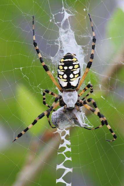 florida spider flickr photo sharing