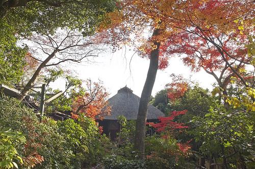 【写真】紅葉 : 西行堂