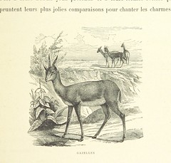 Image taken from page 59 of 'A travers le désert'