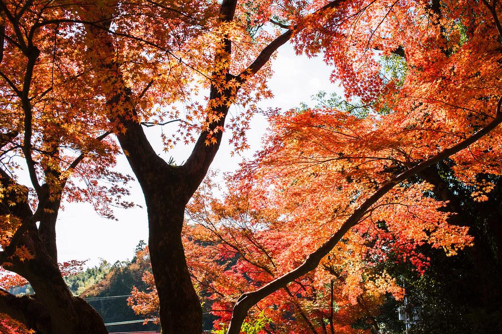 Chougosonshiji Temple