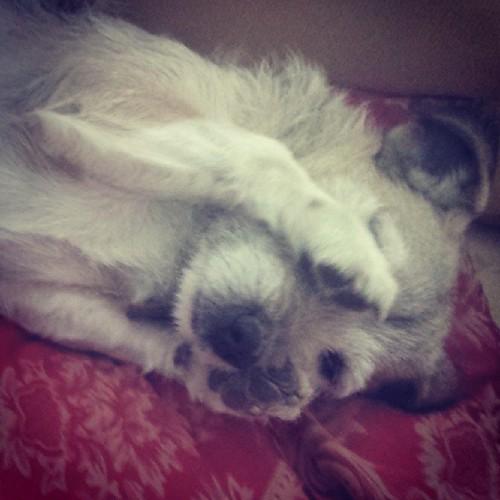 SPOTTY  #DOG #CUTE #DOGGY