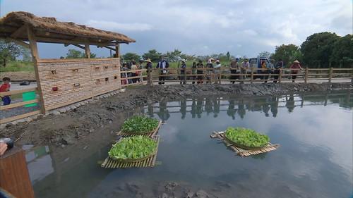 竹子和泥土做的生態觀察牆,還有小鳥可以休息的浮島。