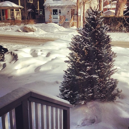 This is where our Christmas tree has been since the New Year. It will become a giant bird feeder this week. Stay tuned!