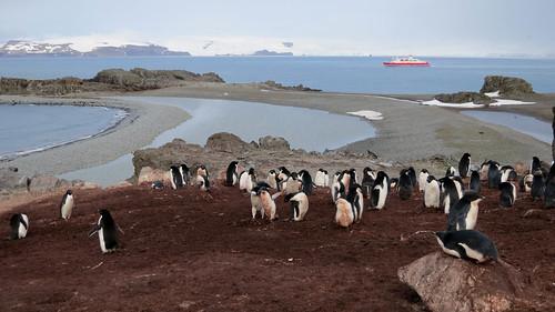 mountain snow penguin scenery antarctica chick glacier poop colony krill adelie southshetlandislands turretpoint
