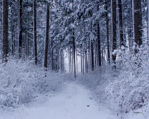 road trees snow nature rural forest canon landscape trail washingtonstate oldroad t4i 1riverat matthewreichel