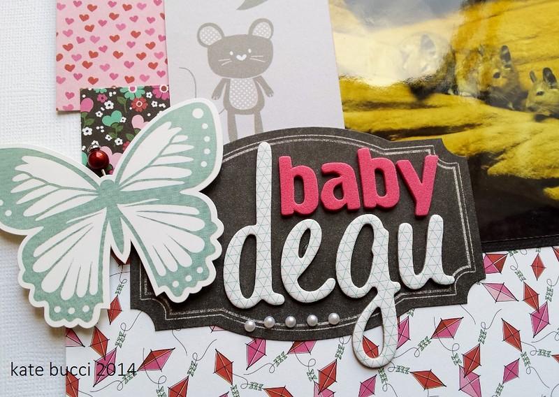 Baby degu closeup