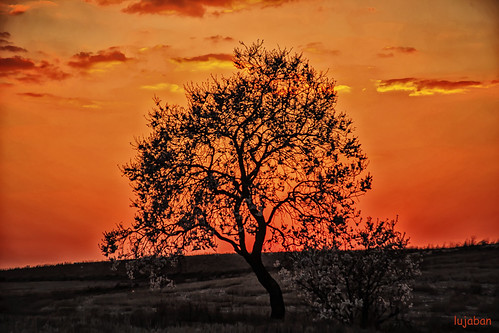 Tree at sunset... by lujaban