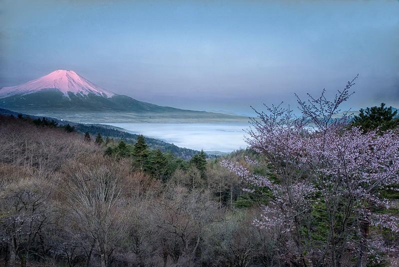 二十曲峠の桜2014