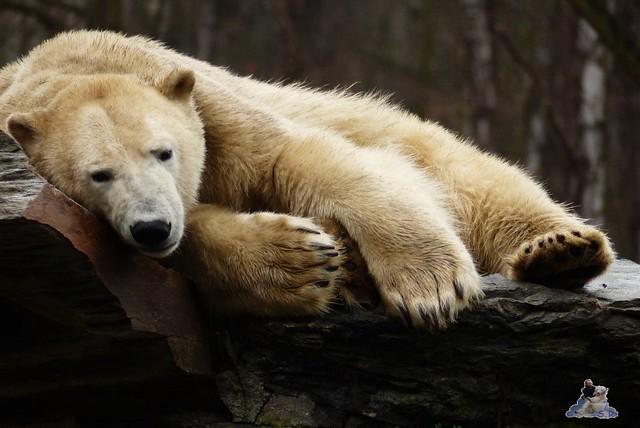 Tierpark Berlin 24.01.2015 75