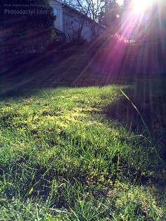 20150214-Green Lush