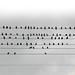 97 Pigeons by Mussi Katz