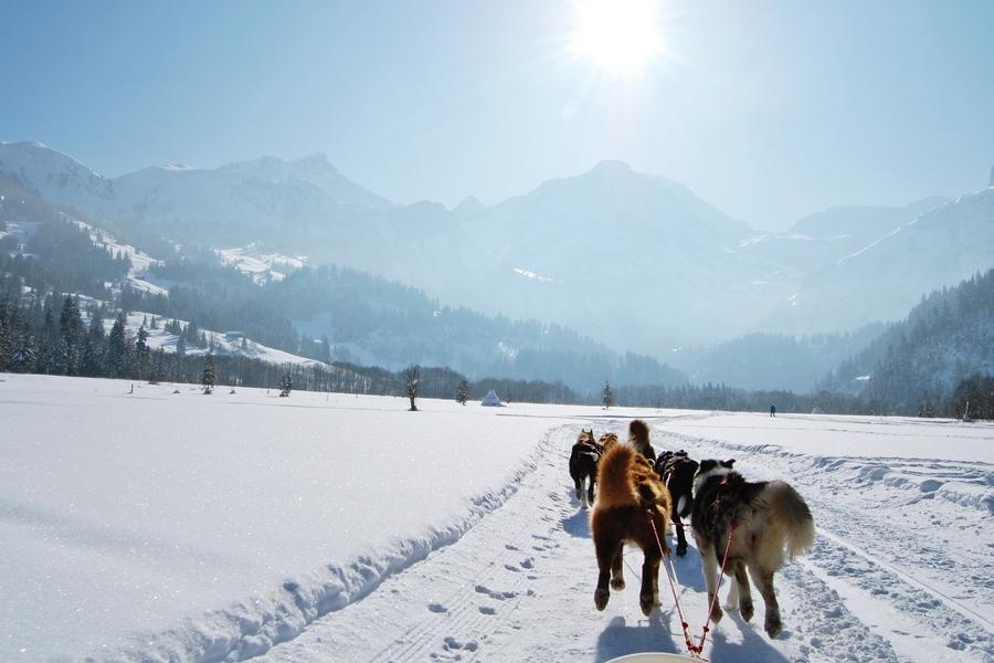 Balade chiens de traineau chiens de traineau (5)
