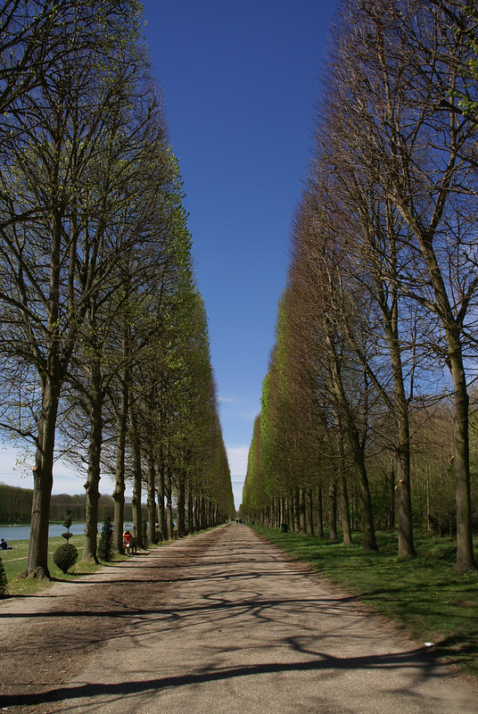 Straight Lines of Versailles
