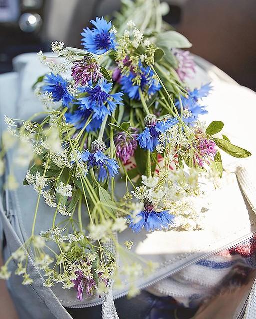 Nie mogłam się powstrzymać i znowu narwałam polniaków 😊   #polnekwiaty #kwiaty #chabry #bukiet #koniczynka #flowers #bouquet #wildflowers #beskidniski