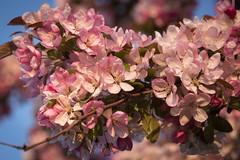 Spring Campus Flowers-4