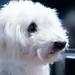 My beloved pet dog - Mash-kun by 京都・武蔵の写真館 Musashi's Photostream