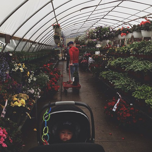 Shopping for our first garden.