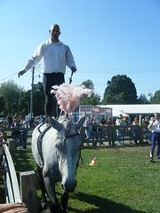english riding(0.0), eventing(0.0), stallion(0.0), jockey(0.0), physical exercise(0.0), animal sports(1.0), equestrianism(1.0), equestrian sport(1.0), sports(1.0), equestrian vaulting(1.0), horse(1.0),
