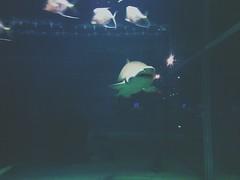 2013.06.21 Greater Cleveland Aquarium