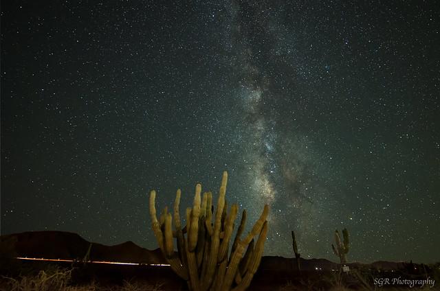 Milky way cactus