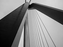 Puente Erasmus