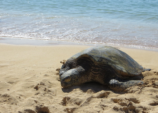Hawaii - August 2013 088