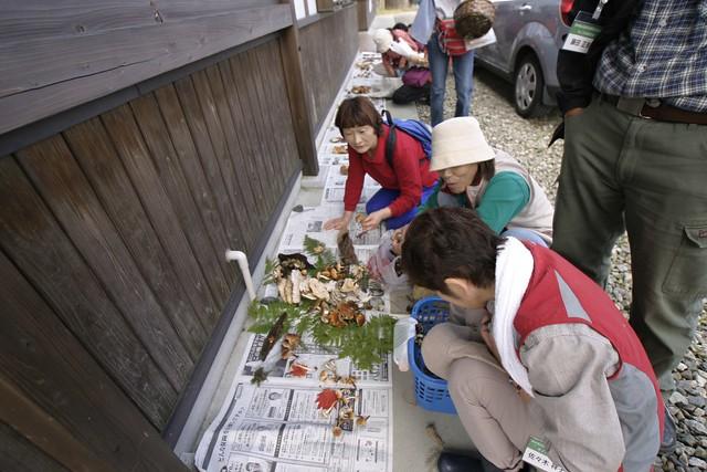 高原の自然館前で採ったキノコを並べて鑑定の開始.