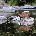 Fawn Crossing Creek