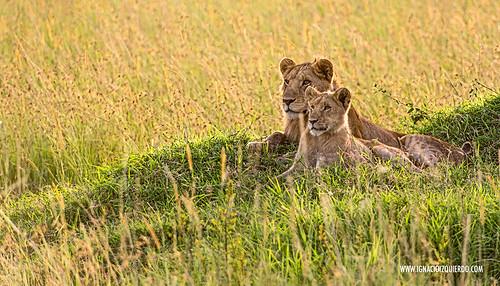 Kenia - Masai Mara 55