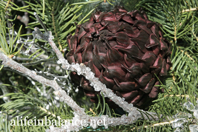 A Longwood Christmas: Purple Artichoke