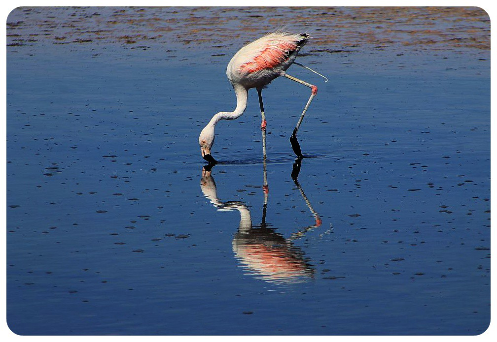 salar de atacama chile flamingo reflection