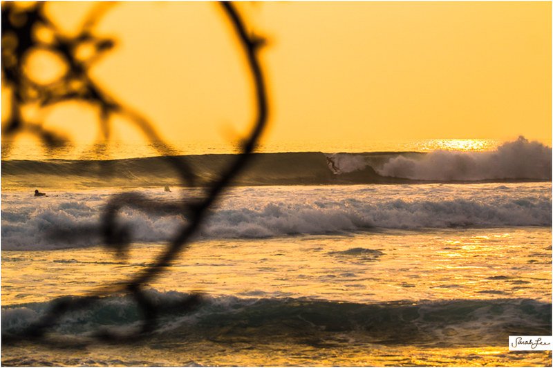 12_Kona_Banyans_Swell_Surf.jpg